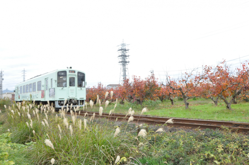 樽見鉄道DSC_6749
