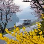 三江線 桜満開、春爛漫の旅 Part3 江の川に沿っての撮影地ロケハン