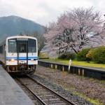 三江線 桜満開、春爛漫の旅 Part4 江の川に沿って撮る