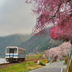 三江線 桜満開、春爛漫の旅 Part8 続編・今日しかない桜の三江線を撮る